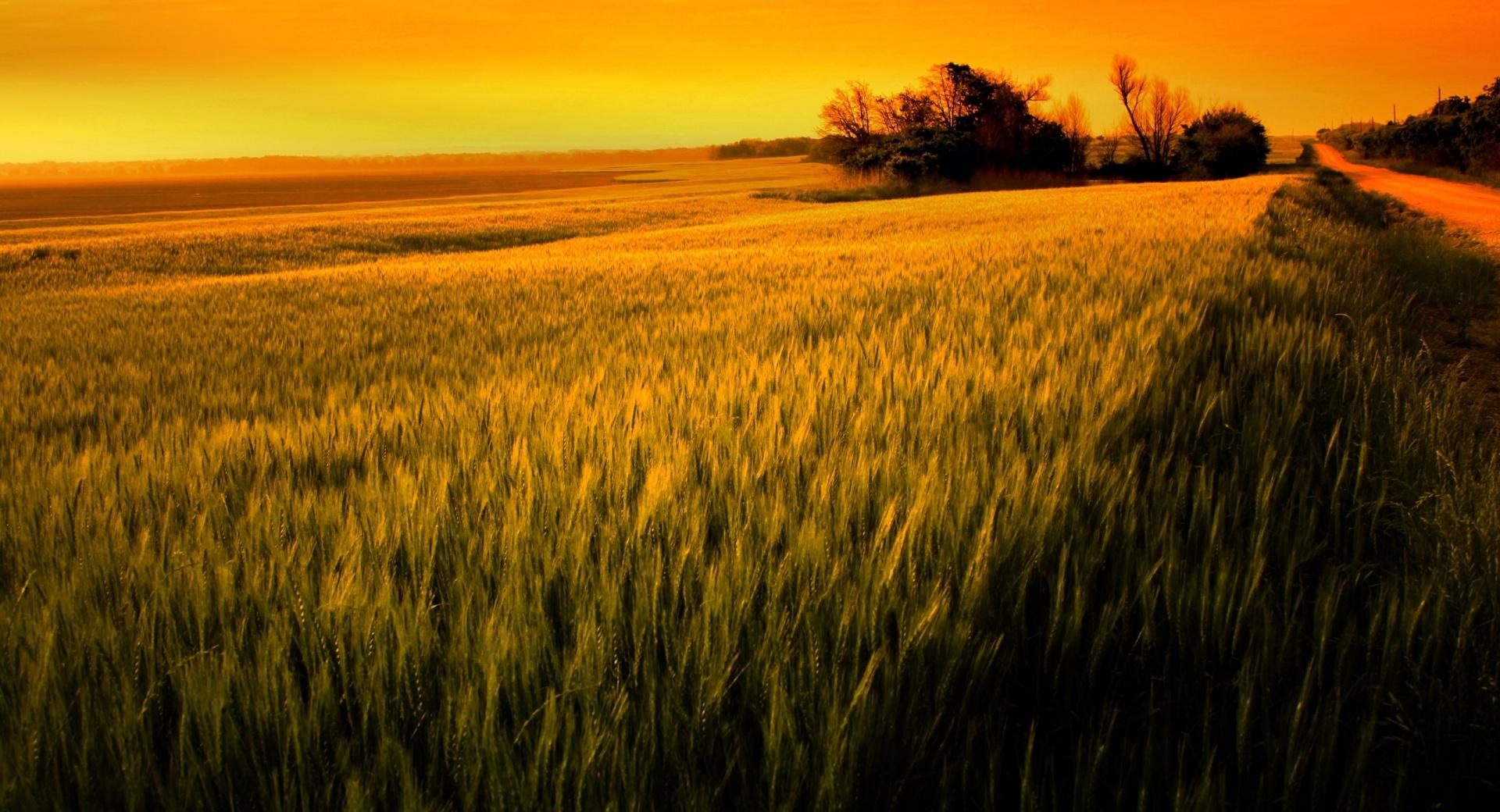 Sunset Over Wheat Field wallpapers HD quality