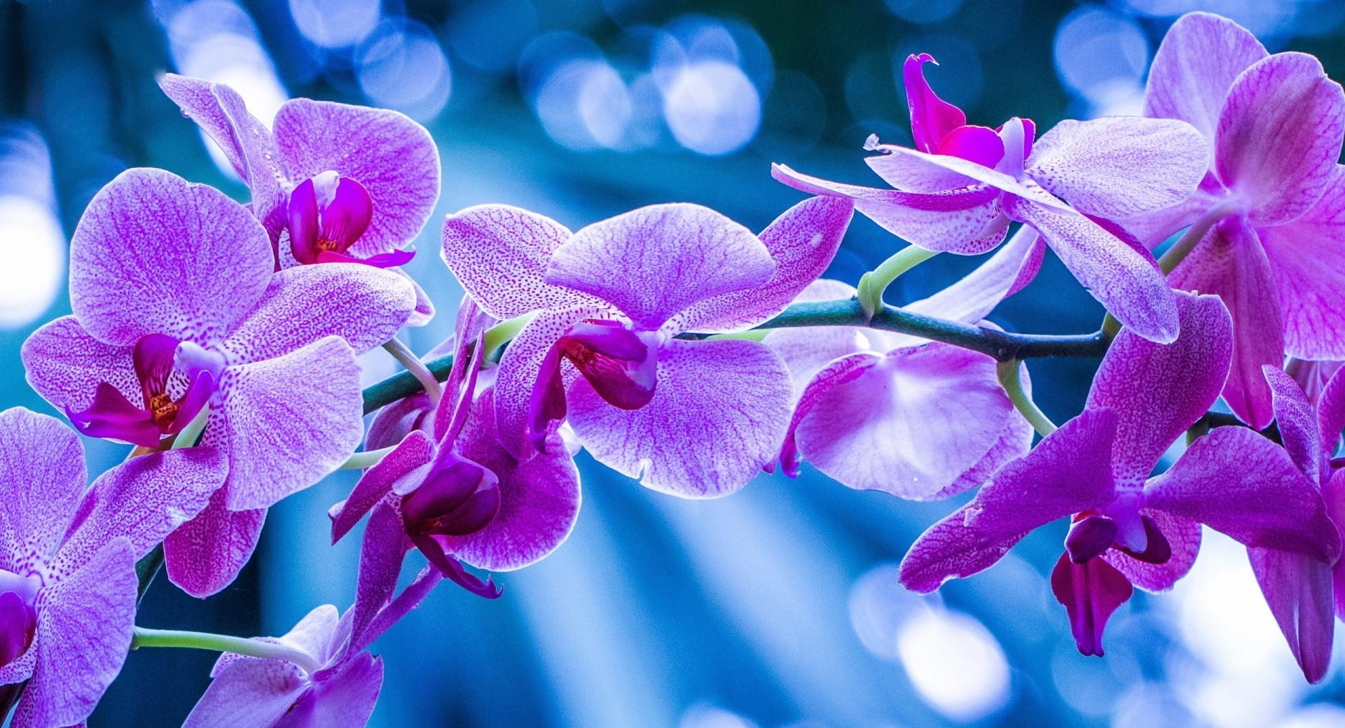Violet Flowers With Bokeh wallpapers HD quality
