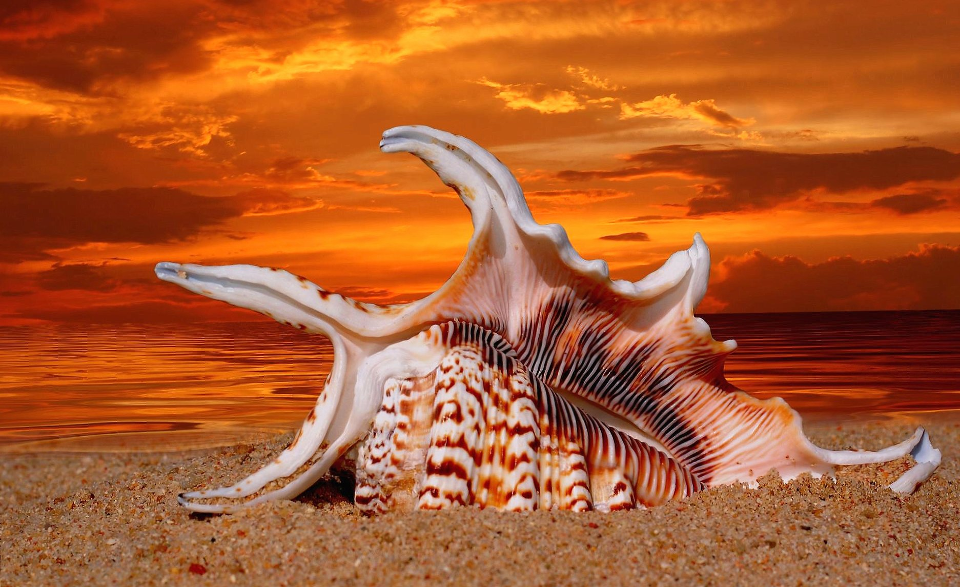 Wonderful shell in sunset beach wallpapers HD quality