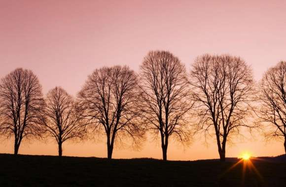 Beech Trees At Sunrise