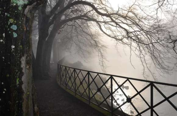 Foggy River wallpapers hd quality