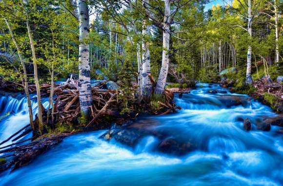 Forest Birch Stream, Long Exposure
