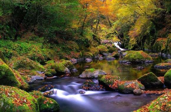 Forest river autumn
