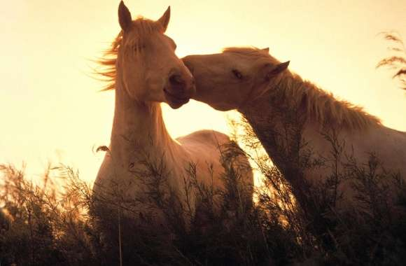 Kiss horse wallpapers hd quality