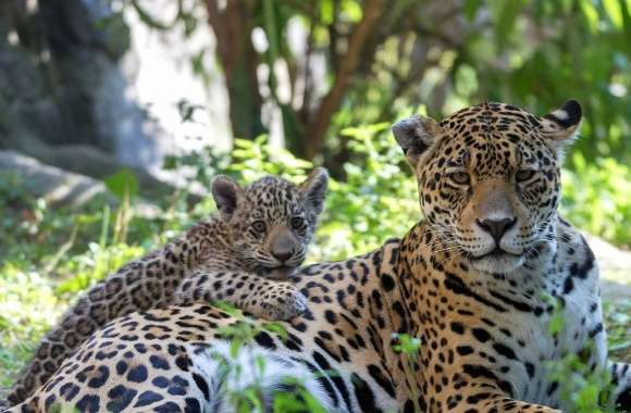 Leopard and its cub resting on the ground