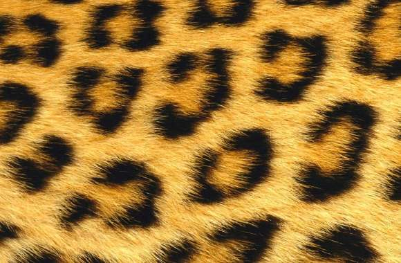 Leopard fur wallpapers hd quality