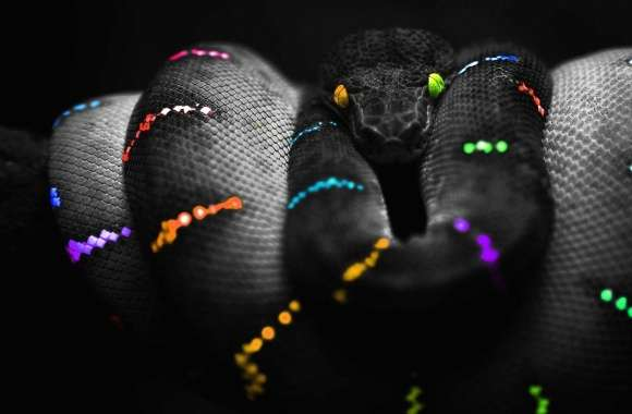 Multicolor black snake wallpapers hd quality