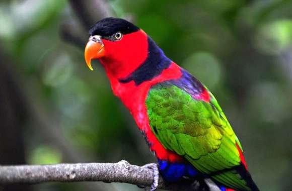 Parrot colorfull