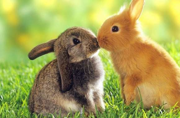 Rabbit kiss wallpapers hd quality