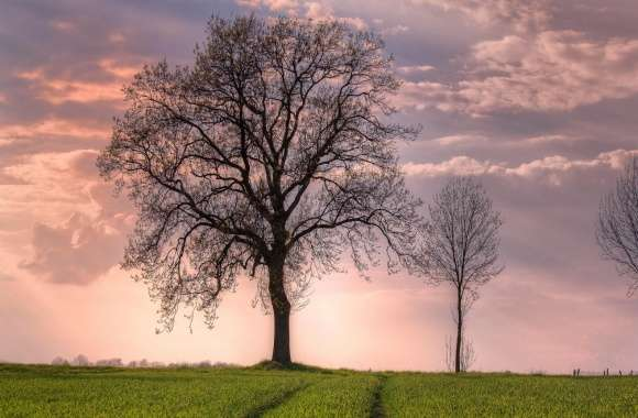 Trees In Open Field wallpapers hd quality