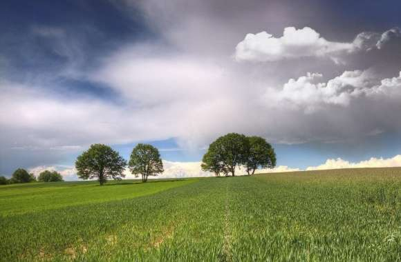 Trees On Fields Clouds wallpapers hd quality