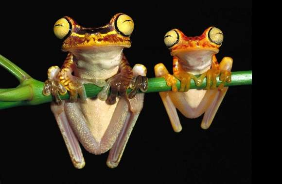 Two frogs big and little wallpapers hd quality