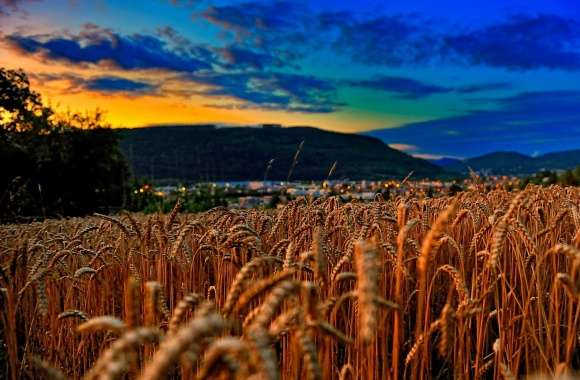 Wheat Field At Twilight wallpapers hd quality