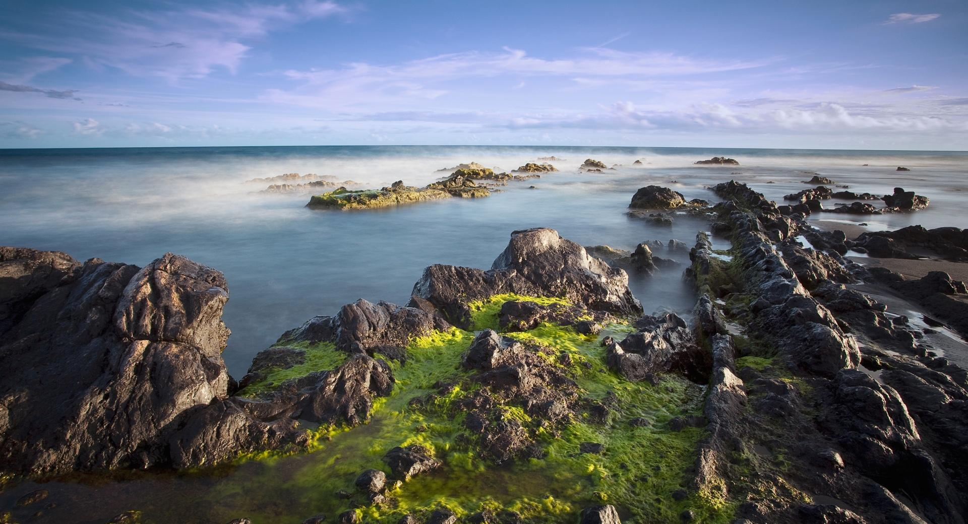 Algae On Rocks wallpapers HD quality