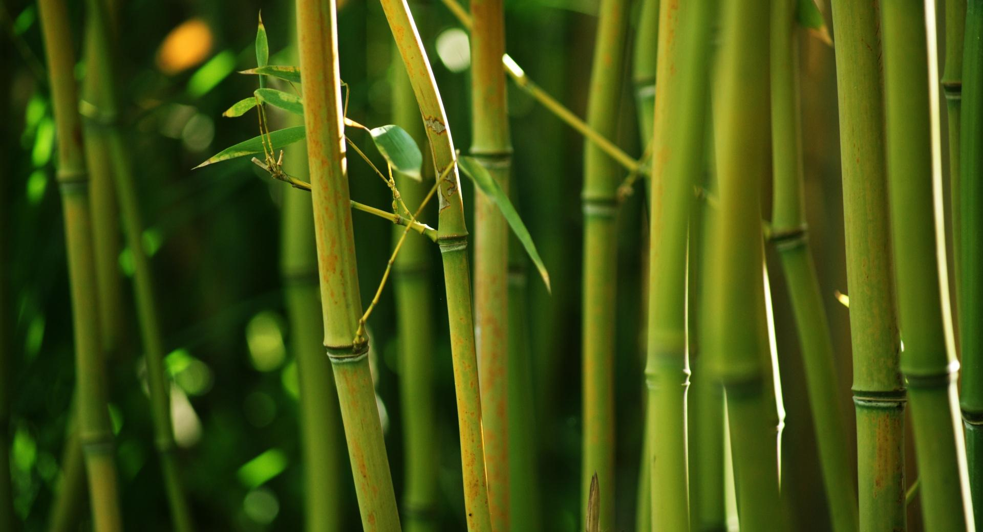 Bamboo Stems wallpapers HD quality