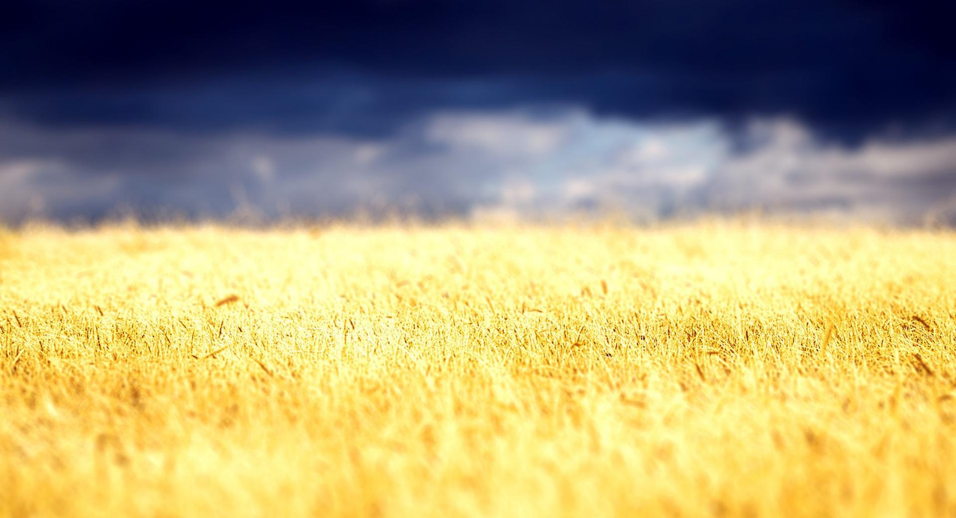 Beautiful Crop Field wallpapers HD quality