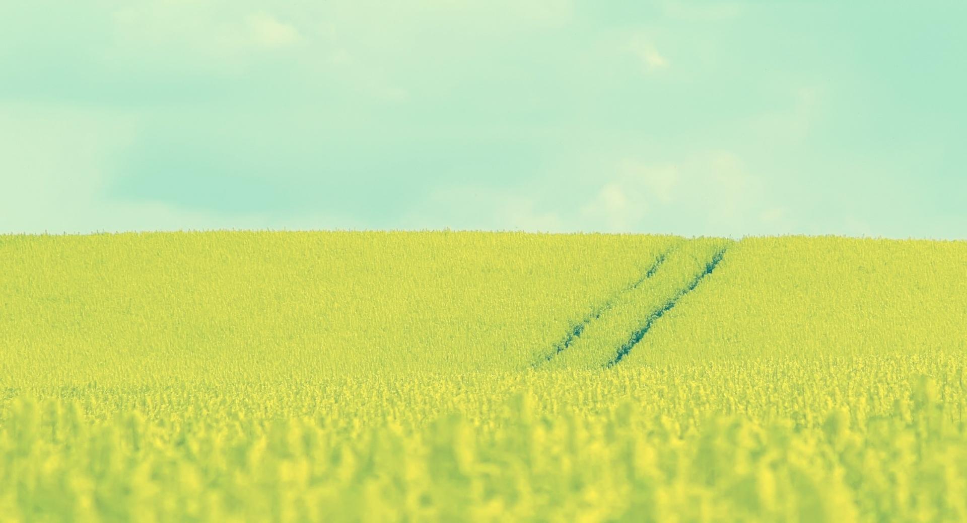 Beautiful Mustard Field wallpapers HD quality