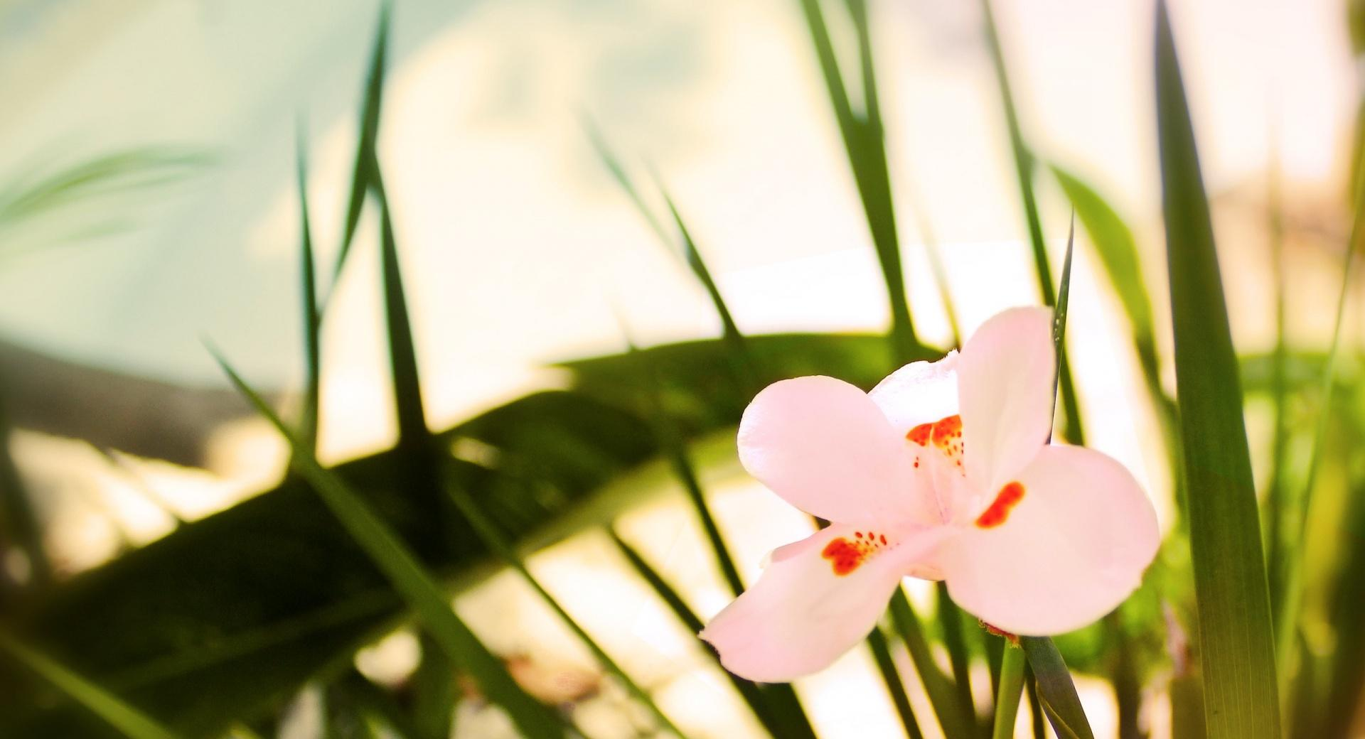 Beautiful Pink Flower wallpapers HD quality