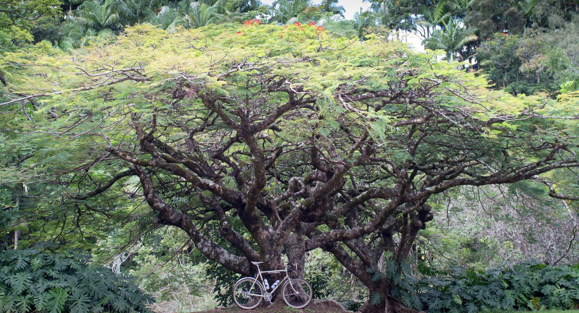 Bicycle Under a Tree wallpapers HD quality