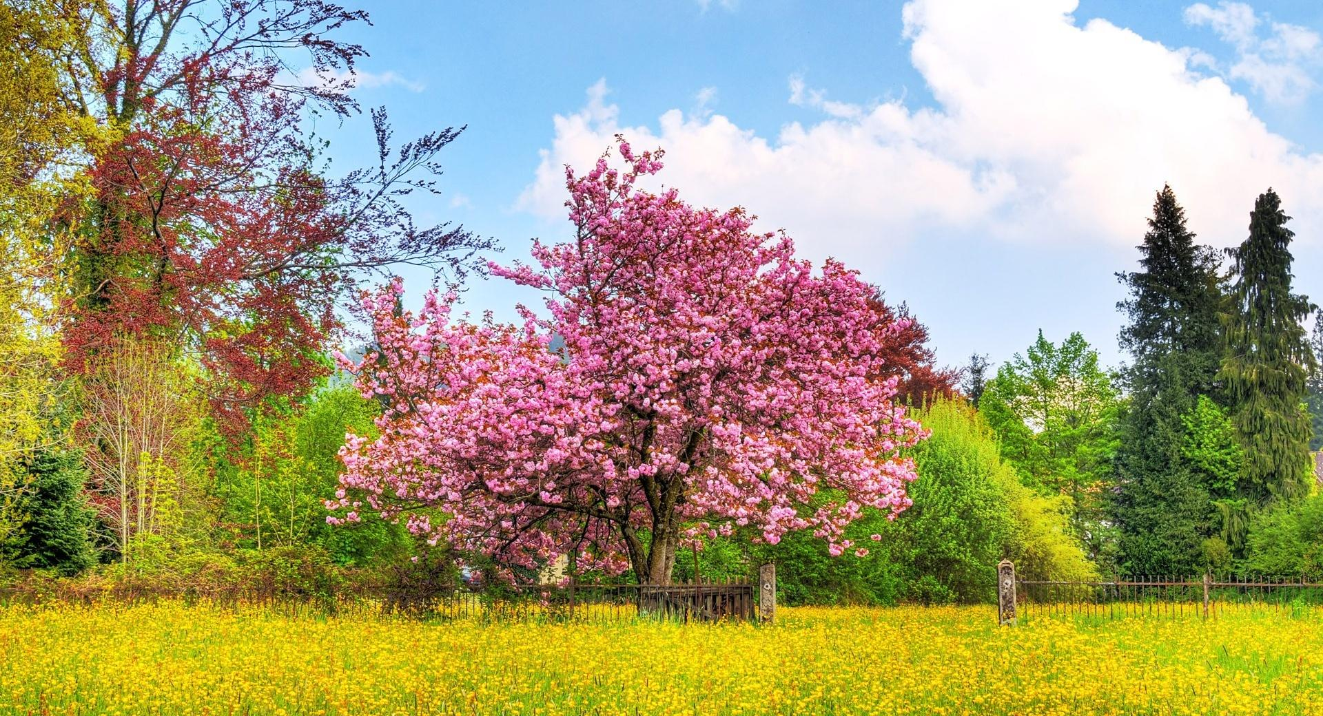 Blooming Trees wallpapers HD quality