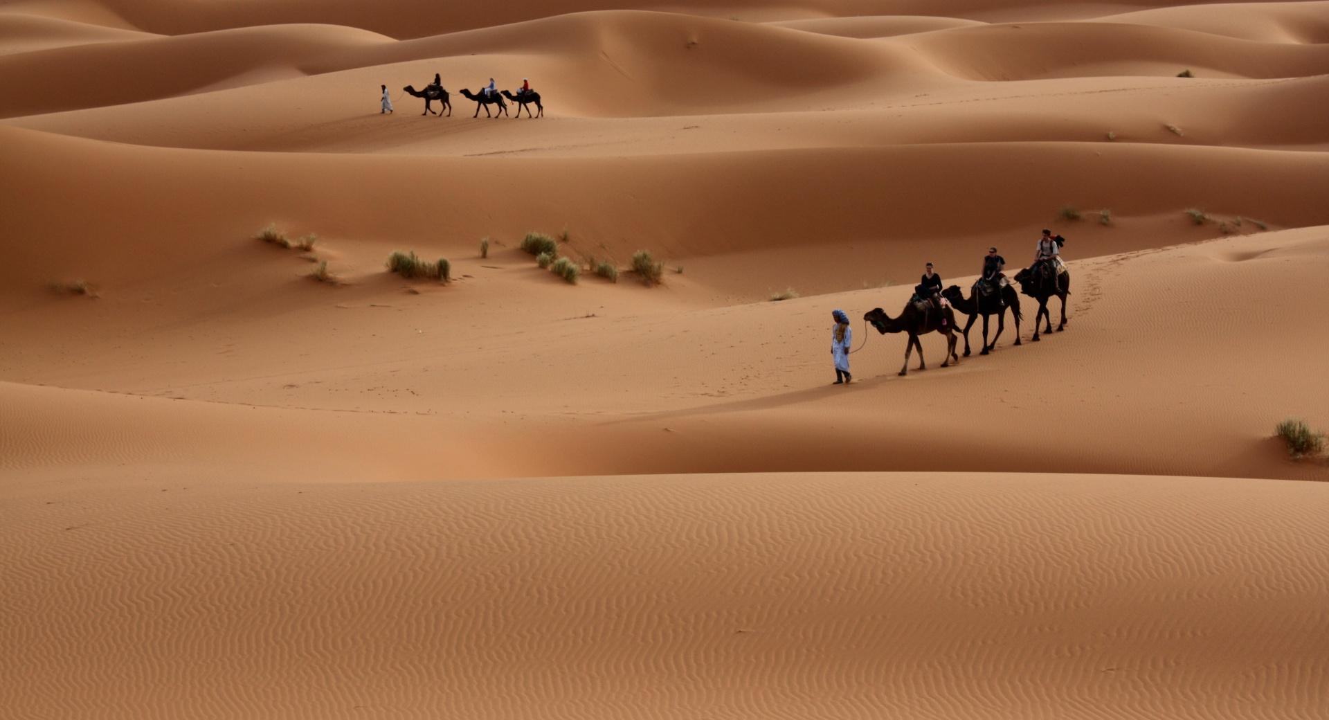 Camels Tour wallpapers HD quality