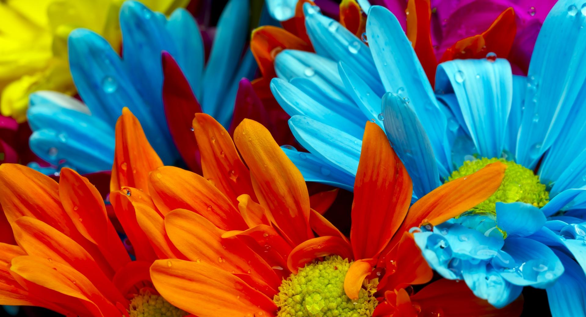 Colorful Flowers wallpapers HD quality
