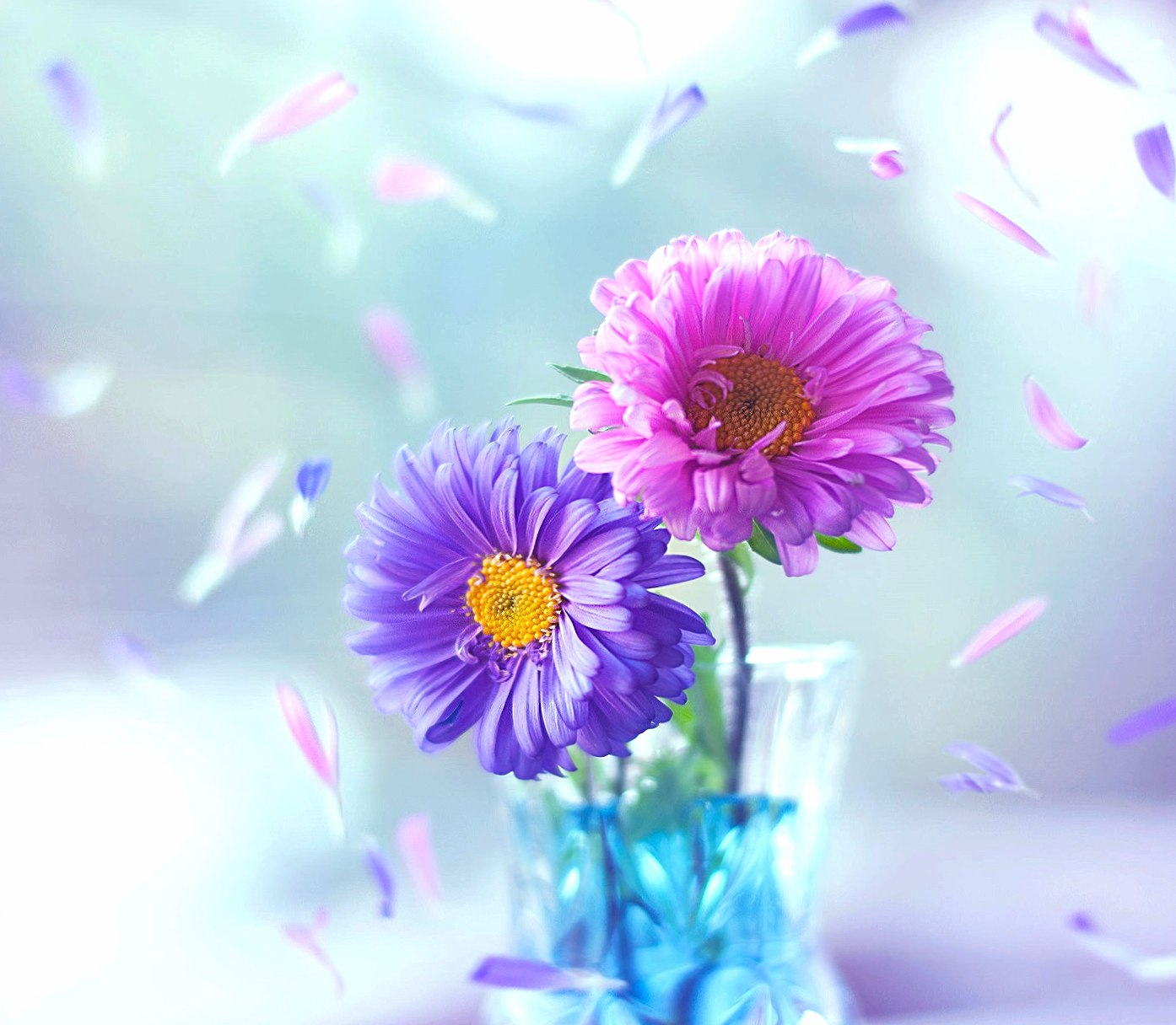 Colorful Flowers HD wallpapers HD quality