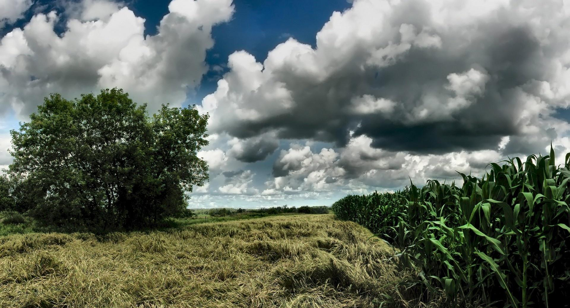 Cornfield Cloudy Sky wallpapers HD quality
