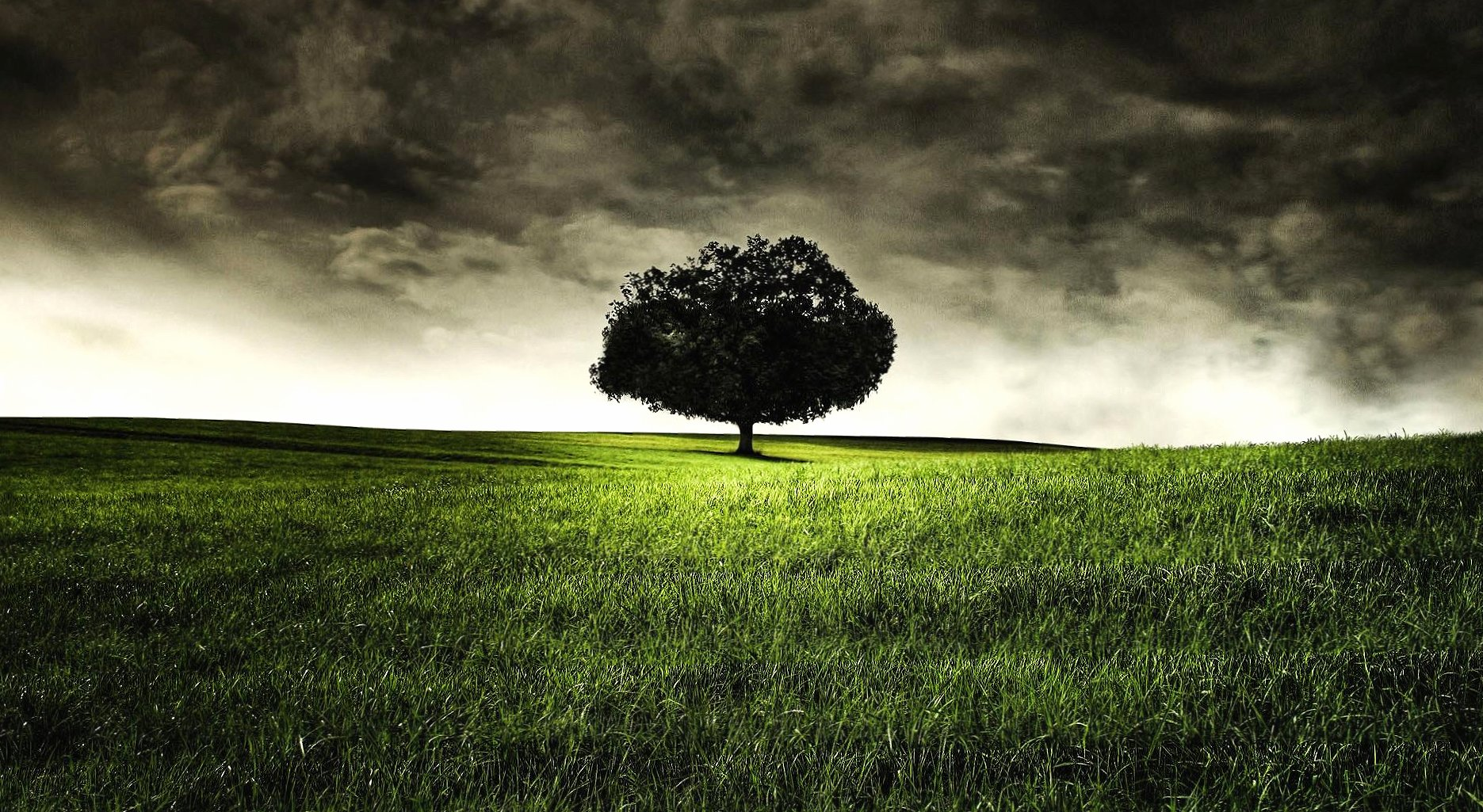 dark grass landscape with tree wallpapers HD quality