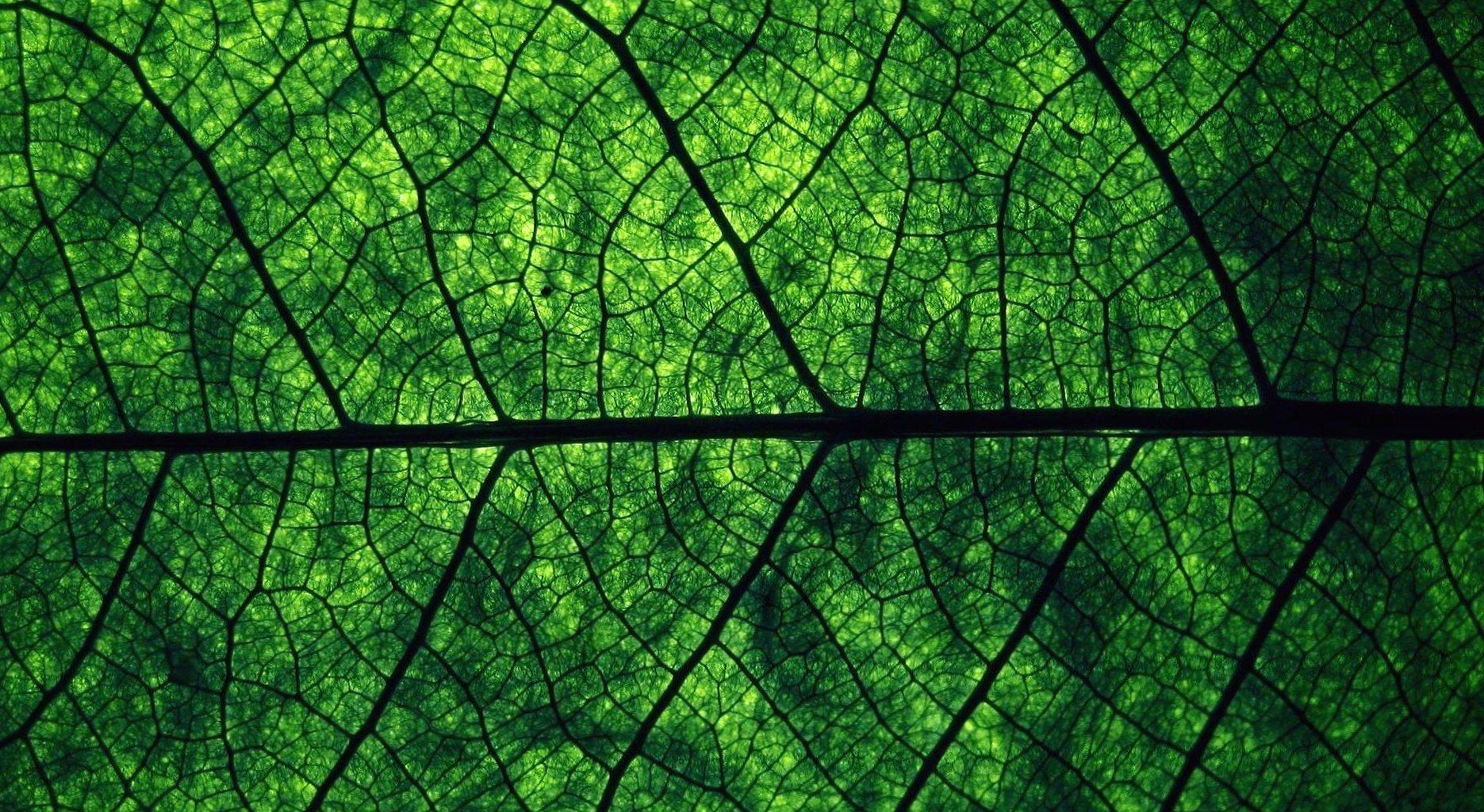 Dark green leave macro wallpapers HD quality