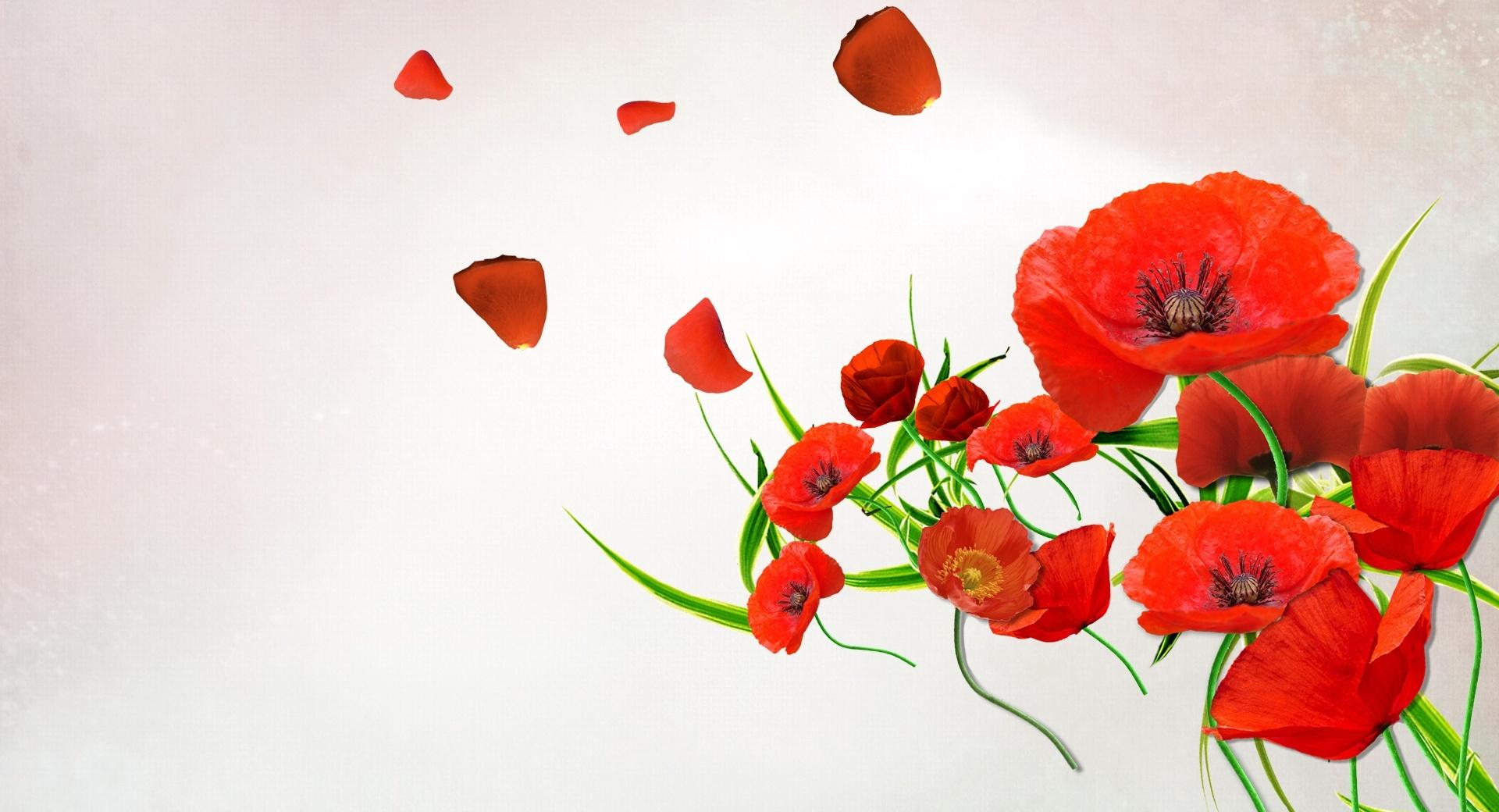 Desktop Poppies wallpapers HD quality
