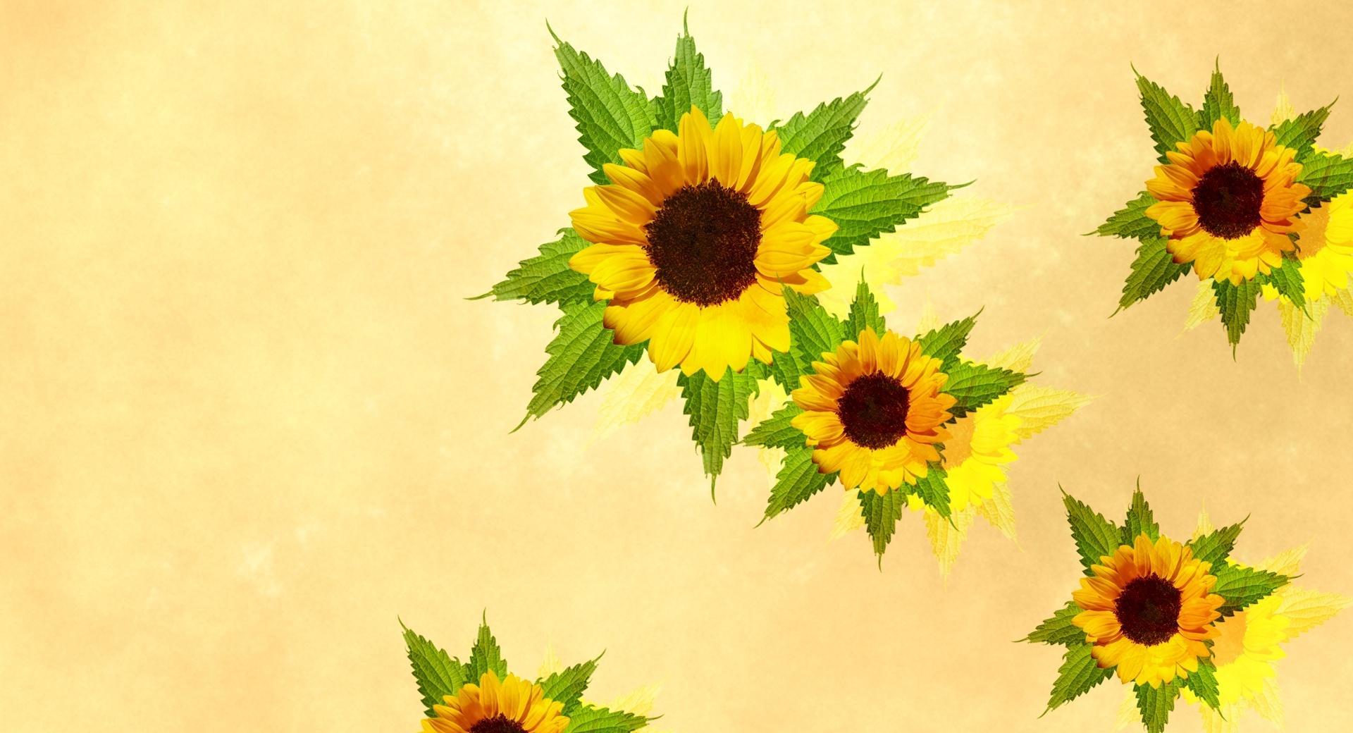 Desktop Sunflowers wallpapers HD quality