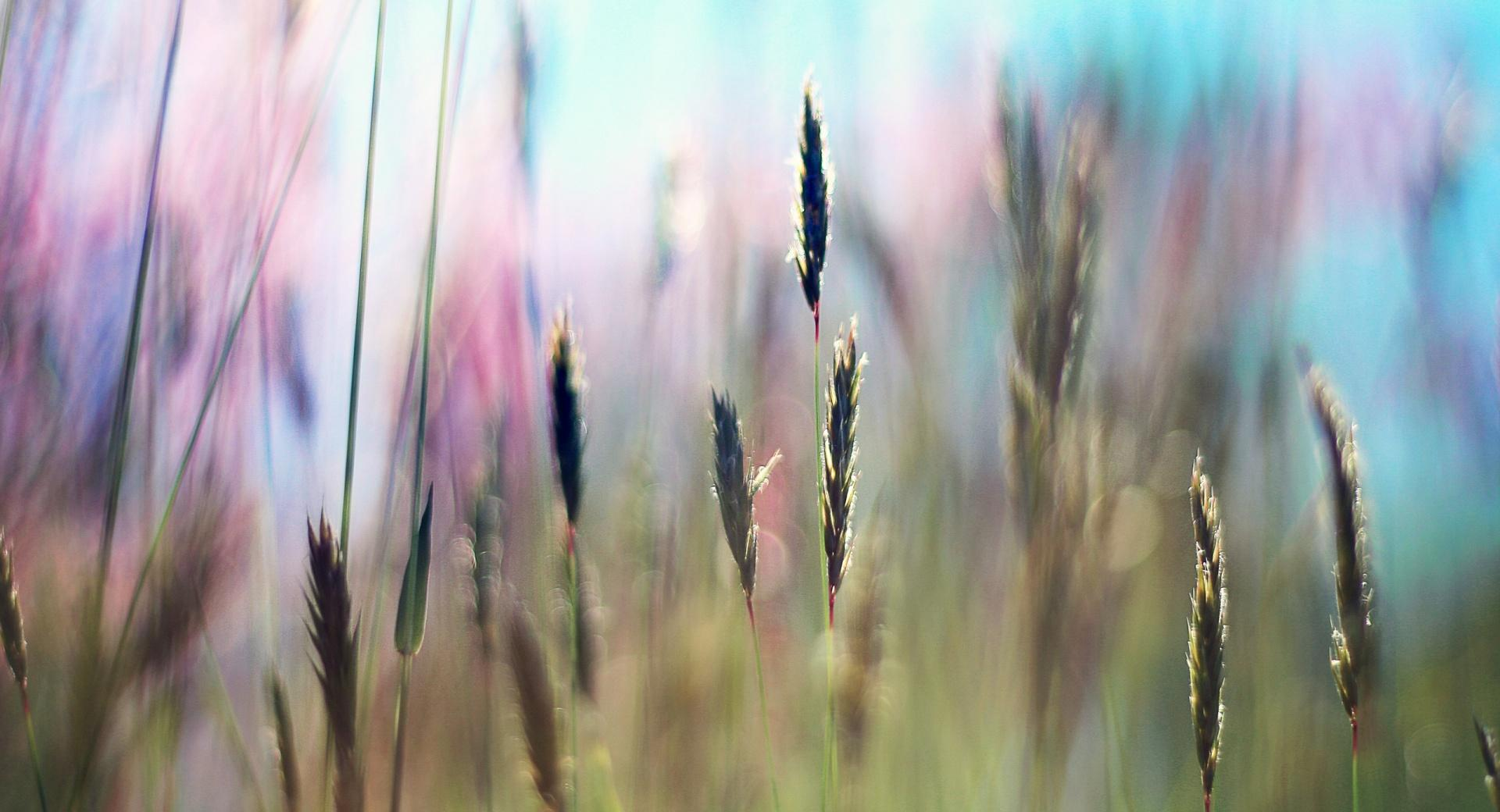 Field Grass wallpapers HD quality