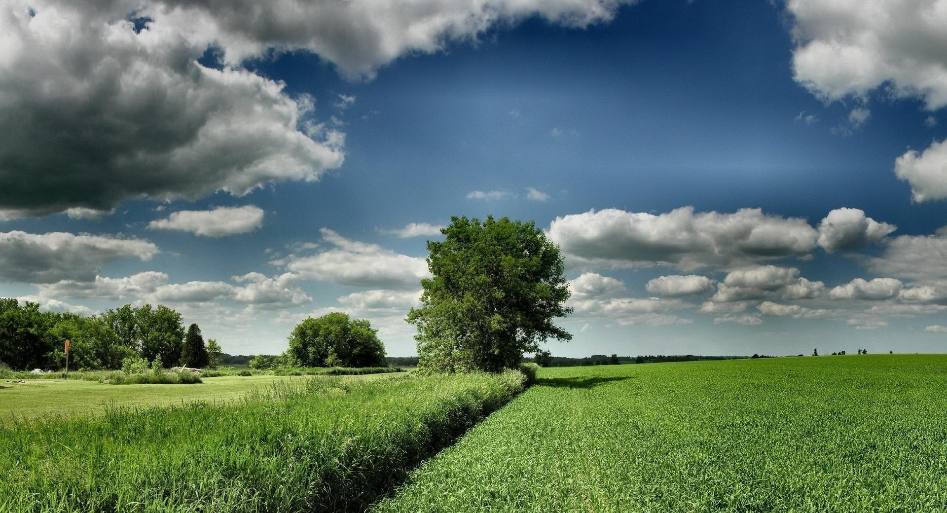 Field Tree Cloud Blue Sky wallpapers HD quality