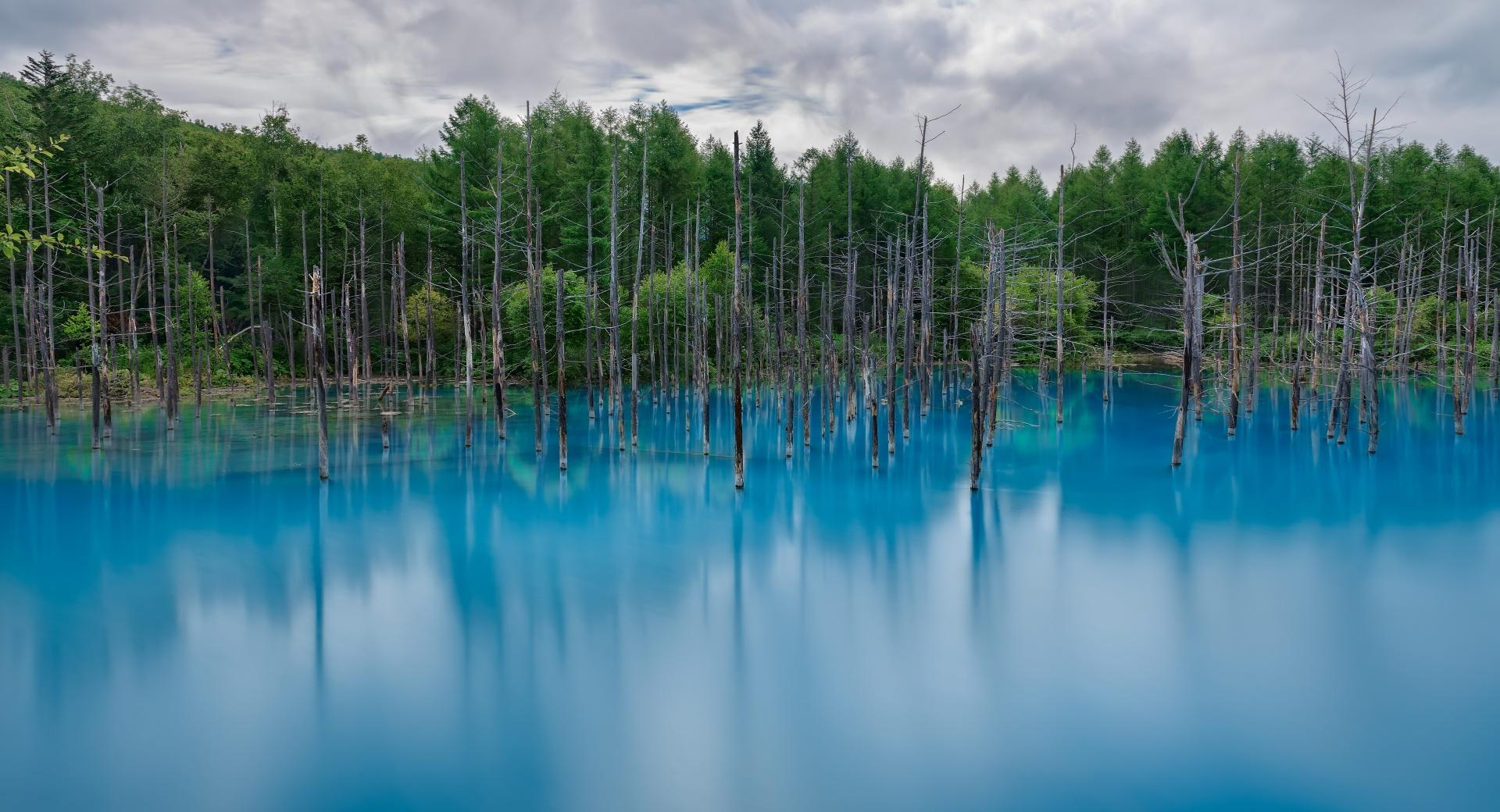Flooded Forest wallpapers HD quality