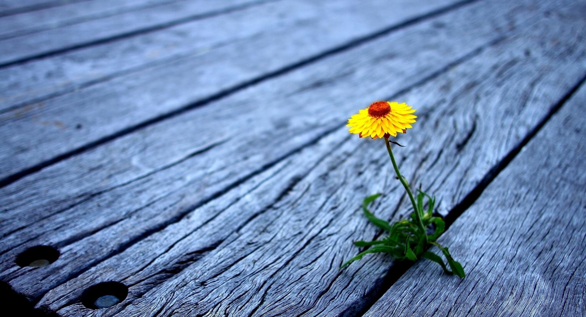 Flower Between Wooden Boards wallpapers HD quality