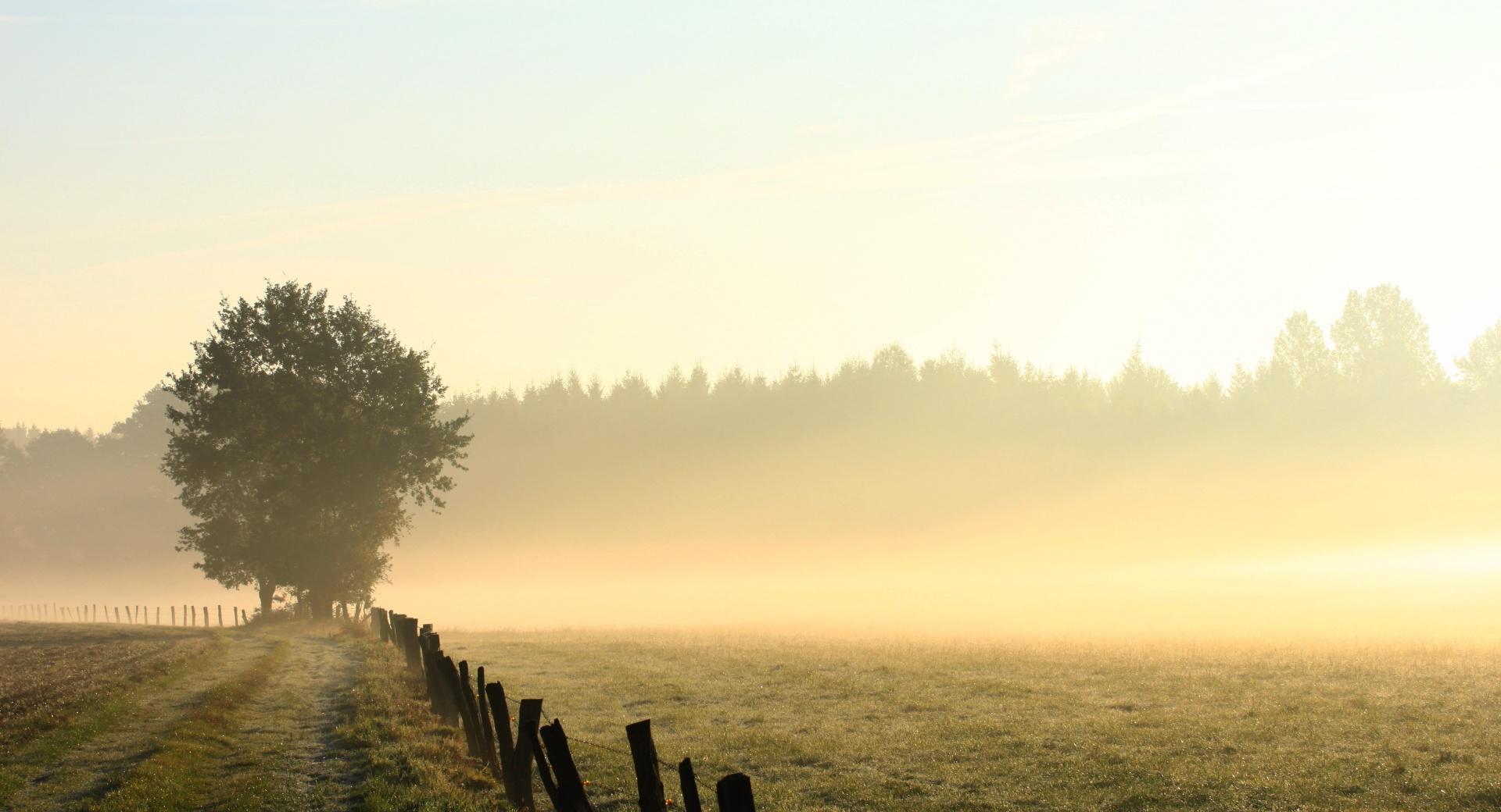 Foggy Field, Morning wallpapers HD quality