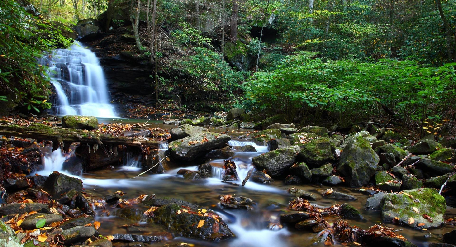 Forest Creek, Summer wallpapers HD quality