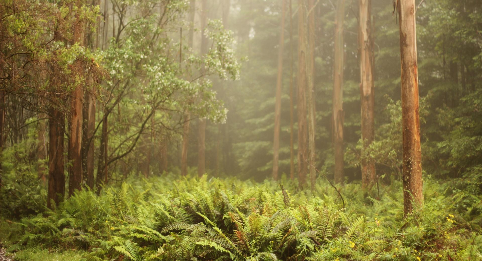 Forest Ferns wallpapers HD quality