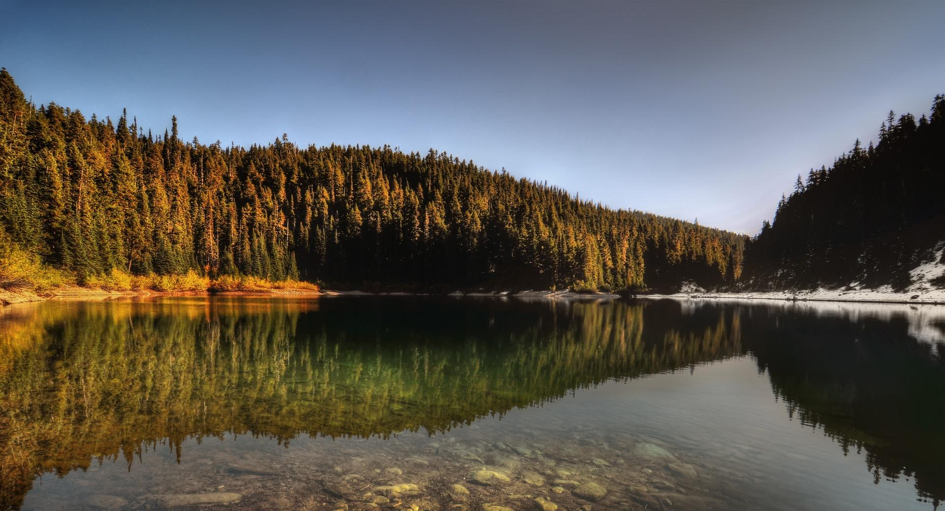 Forest Lake Reflection wallpapers HD quality