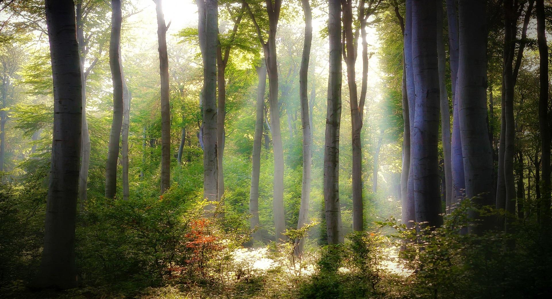 Forest Light wallpapers HD quality