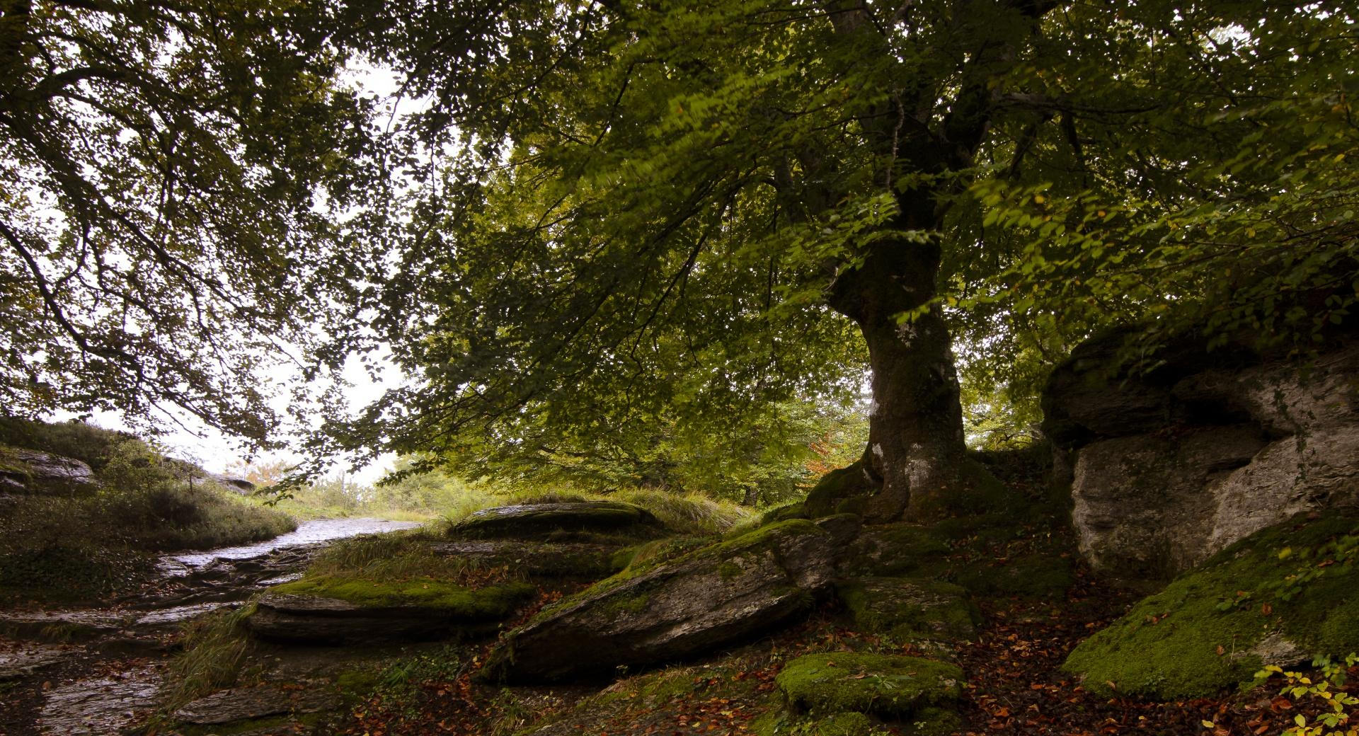 Forest Stone Slabs wallpapers HD quality