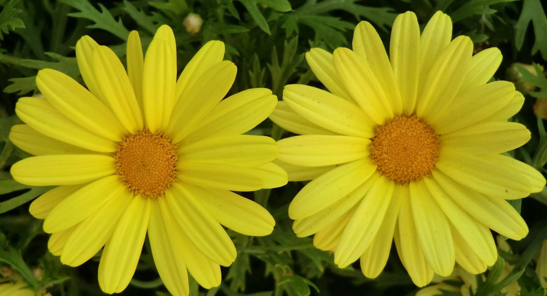 Gira Flower wallpapers HD quality