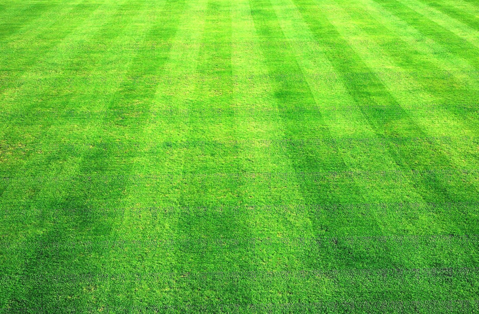 Grass clippings wallpapers HD quality