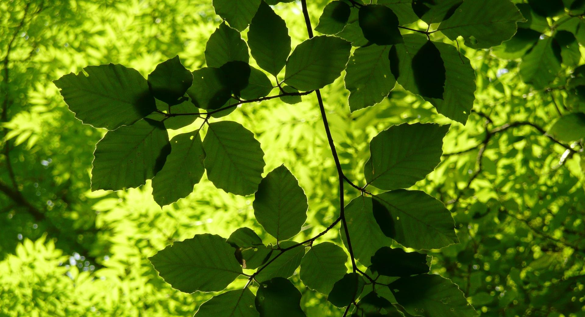Green Leaves Branch at 640 x 1136 iPhone 5 size wallpapers HD quality