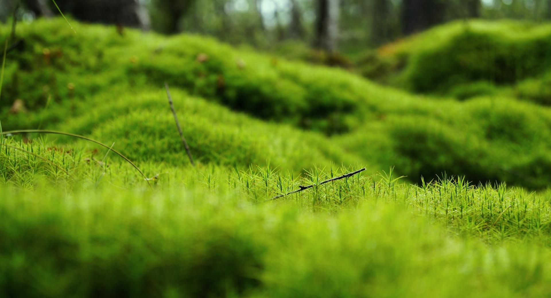 Green Moss wallpapers HD quality