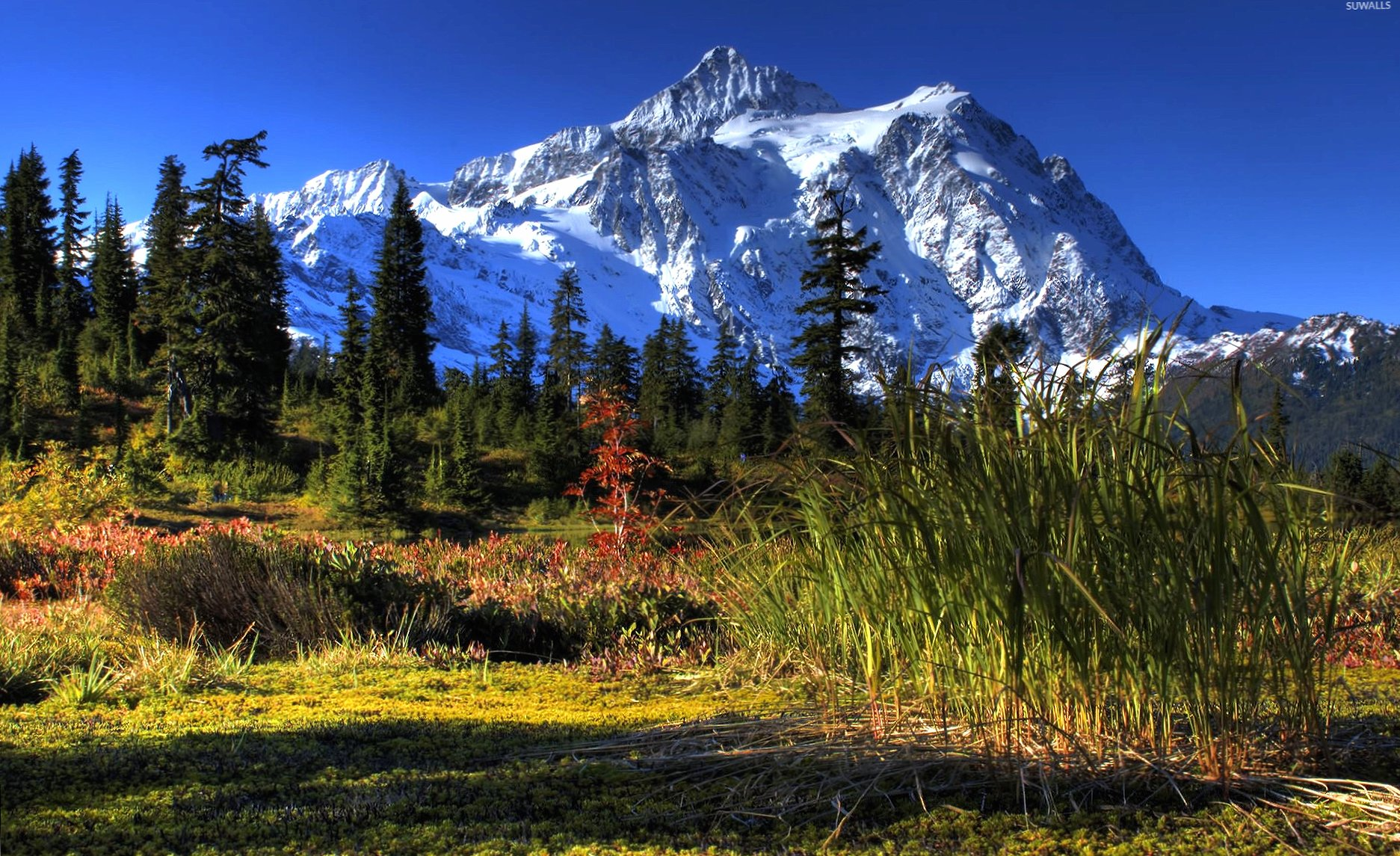 Green nature by the snowy peak wallpapers HD quality