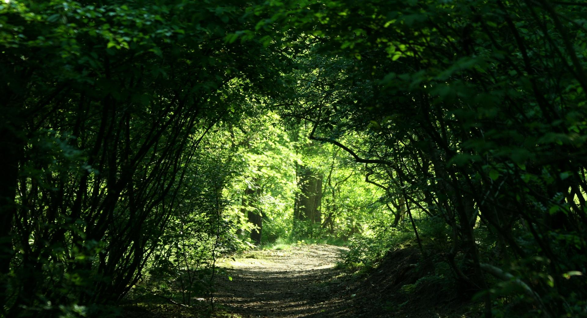 Green Tunnel wallpapers HD quality