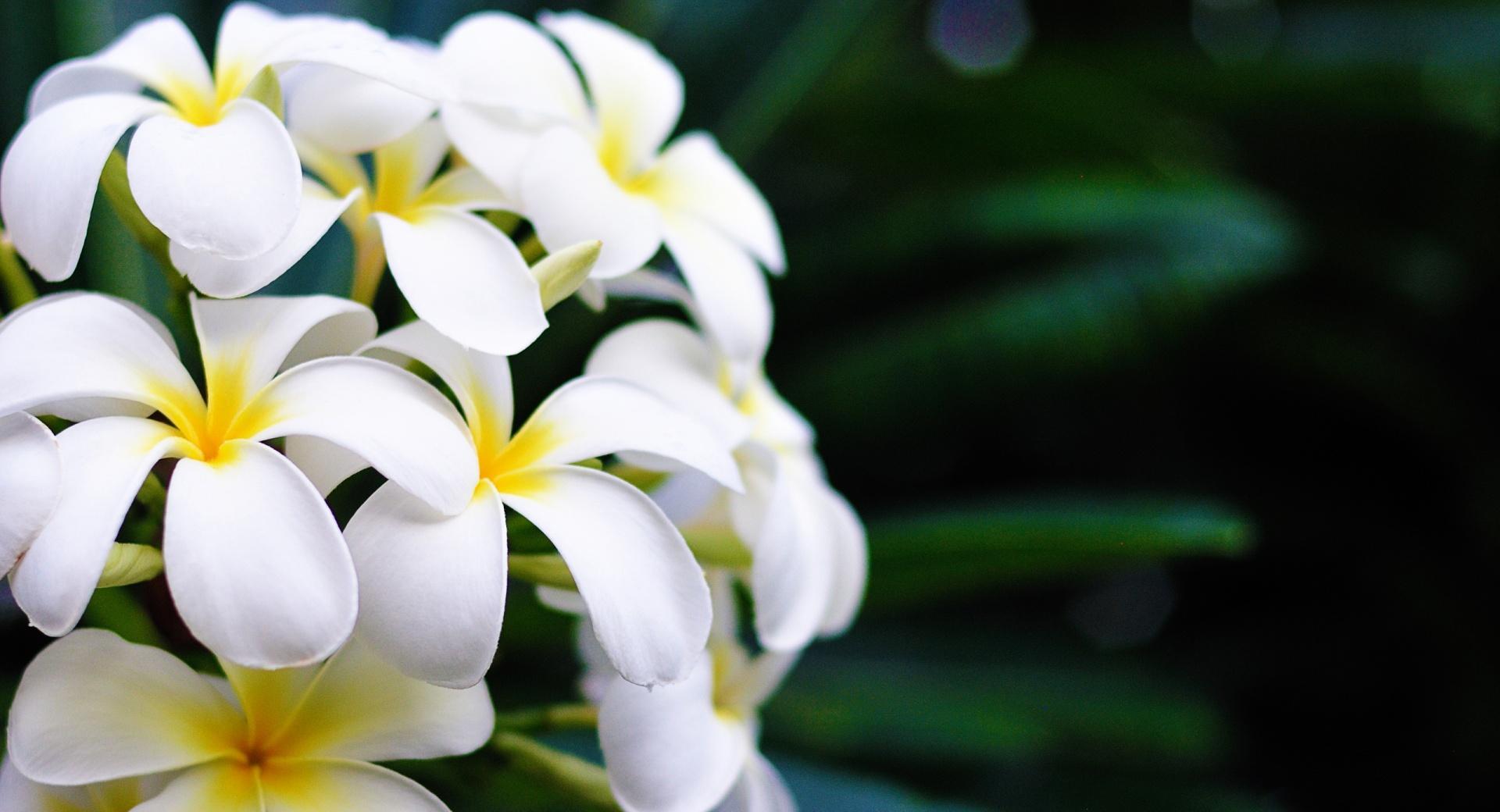 Hawaii Flowers wallpapers HD quality