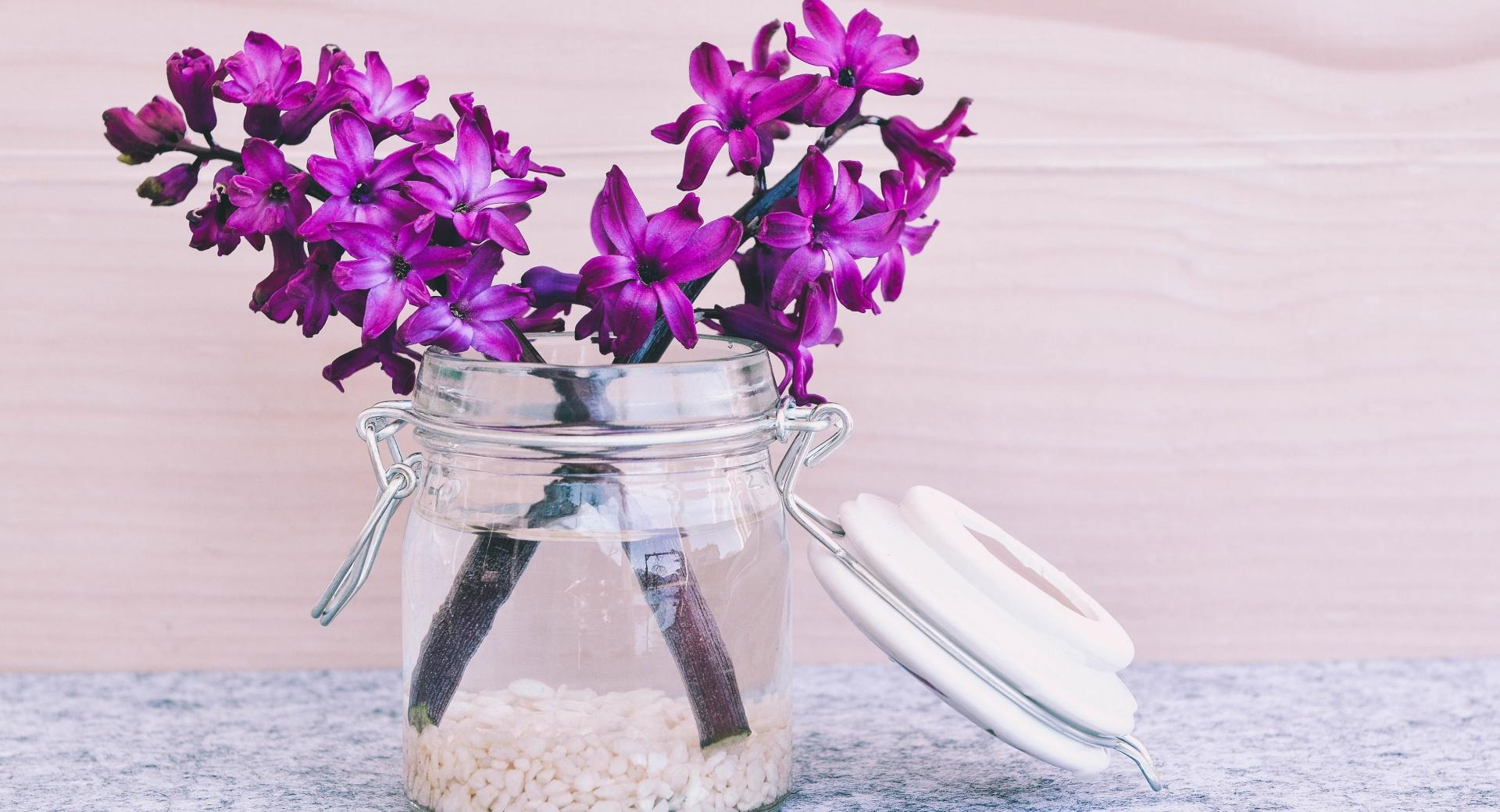 Hyacinths wallpapers HD quality